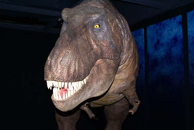 Dinosaurs Tyranosauros edit